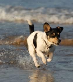 Le chien serait le meilleur moyen de soulager le stress