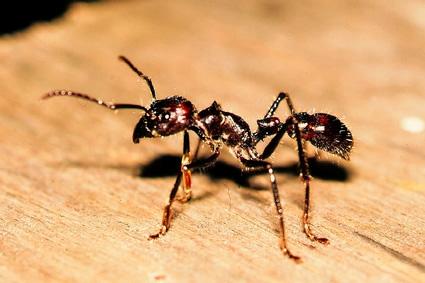 le jour des fourmis pdf gratuit