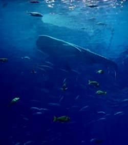 L aquarium le plus grand du monde vid o etrange et for Aquarium insolite