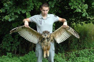 Un hibou grand duc victime d une ligne lectrique - Office national de la chasse et de la faune sauvage ...