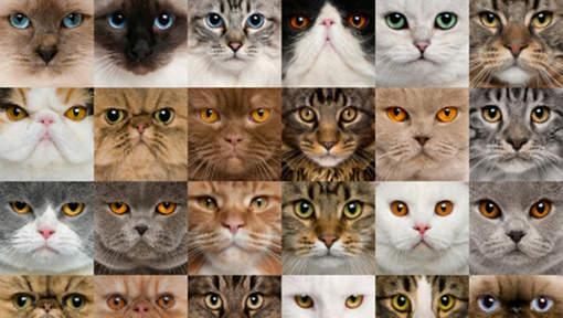 Extrem Elle adopte 550 chats, il demande le divorce | Etrange et Insolite WK85
