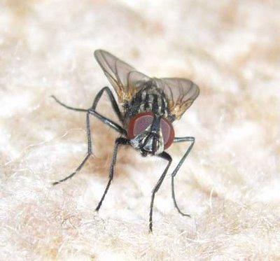 p kin limite deux le nombre de mouches dans les toilettes publiques etrange et insolite. Black Bedroom Furniture Sets. Home Design Ideas