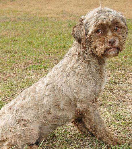 Ressemblant un humain ce chien abandonn devient une star du web etrange - Croisement chien insolite ...