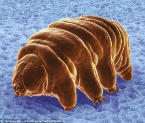 Tardigrades, appelés aussi ours d'eau, sont quelques-uns des animaux les plus fascinants dans le monde