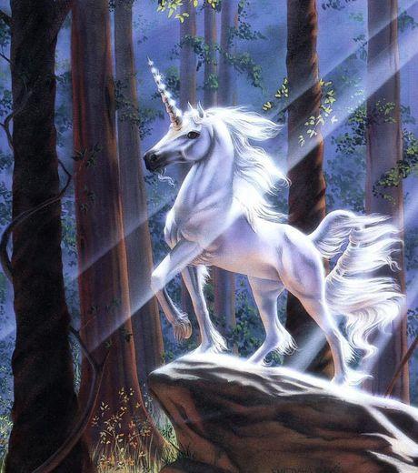 D couvrez la licorne la l gendaire cr ature corne unique galerie etrange et insolite - Image licorne ...