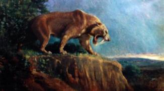 Le smilodon, ou tigre à dents de sabres, a disparu il y a 10 000 ans Crédit Tableau de Charles Knight