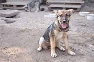 D'après des sources non-officielles, entre cinq et dix habitants de Sotchi sont victimes chaque jour d'attaques d'animaux errants. © thinkstock.
