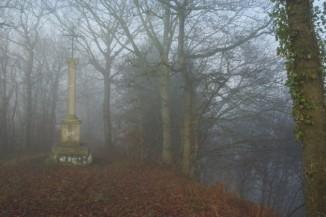 Les forêts normandes abritent-elles des secrets et des bêtes sauvages ? ©Stéphane William Gondoin.