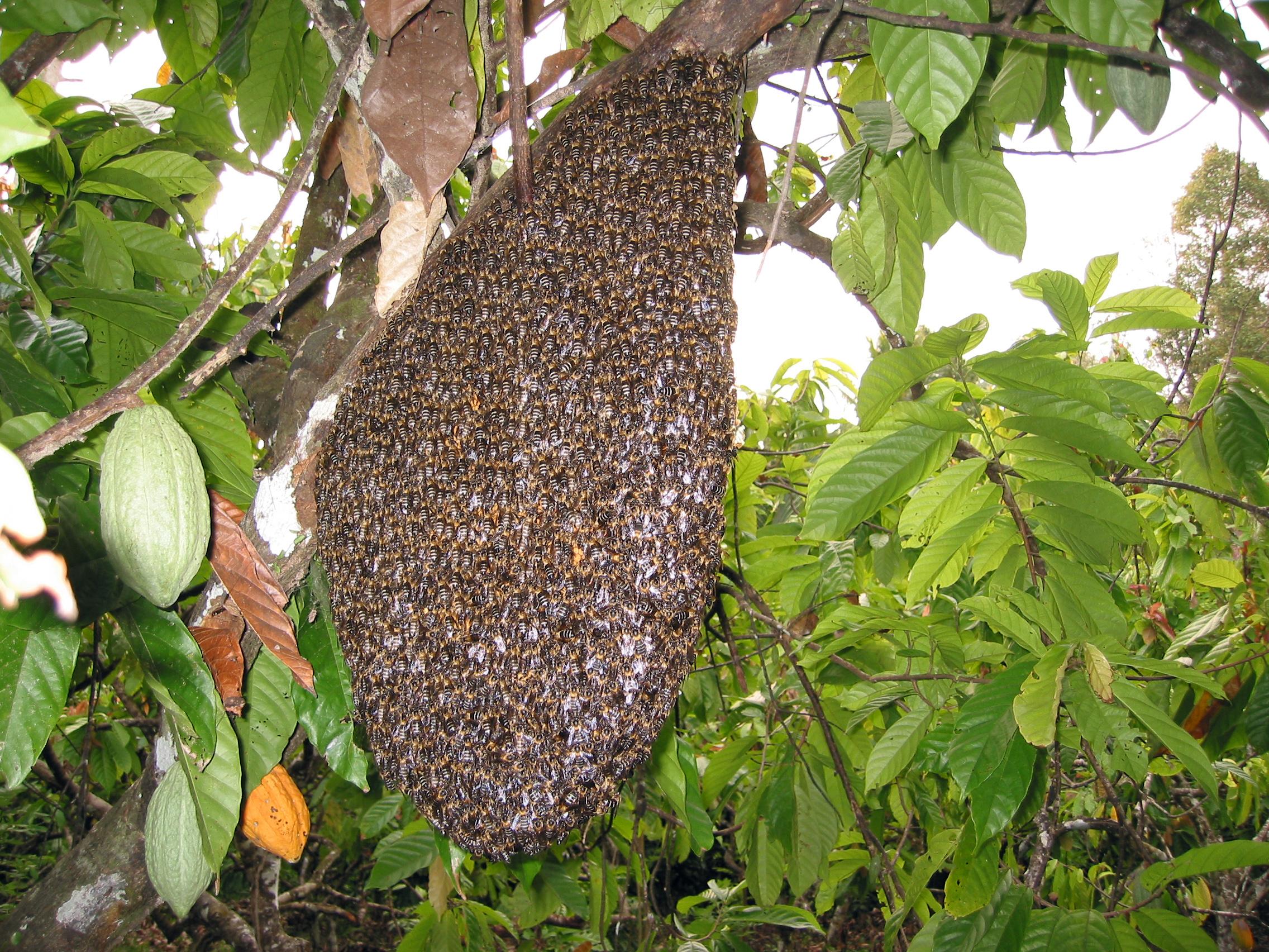 abeille etrange et insolite. Black Bedroom Furniture Sets. Home Design Ideas