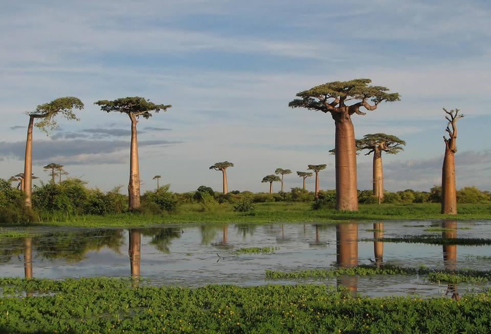 L'image du jour : Automne à Madagascar
