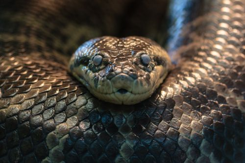 Les serpents auraient fait tellement peur à nos ancêtres que ceux-ci auraient développé une vision plus perfectionnée pour repérer tout ce qui est longiligne et qui se déplace en rampant. © Silvain de Munck, Flickr, cc by nc nd 2.0