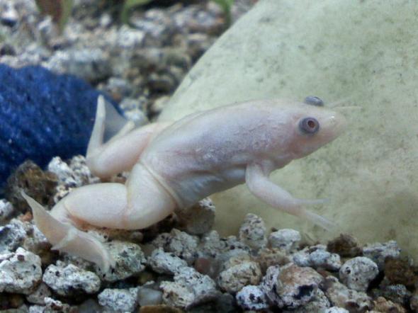 les animaux albinos 11