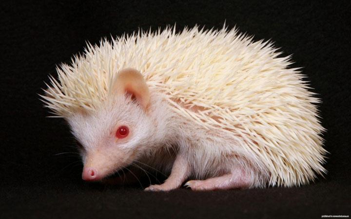 les animaux albinos 19