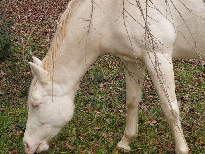 les animaux albinos 21