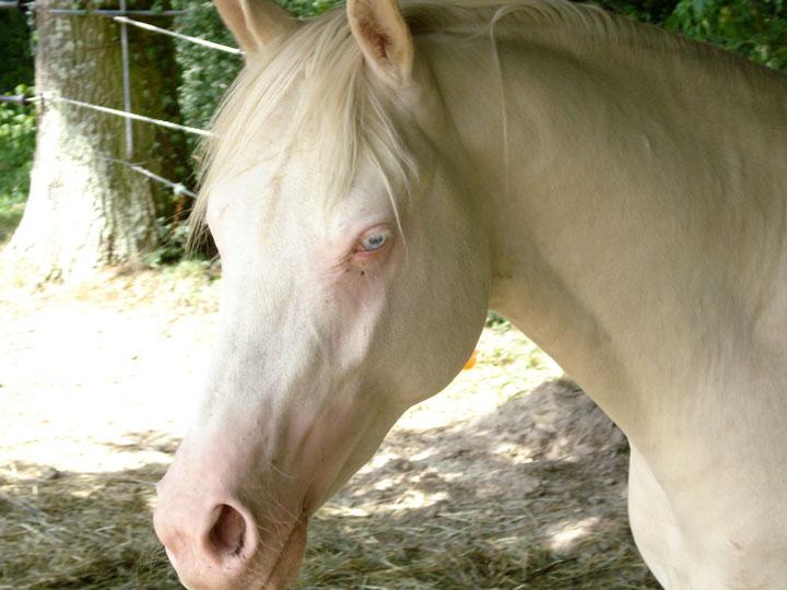 les animaux albinos 22