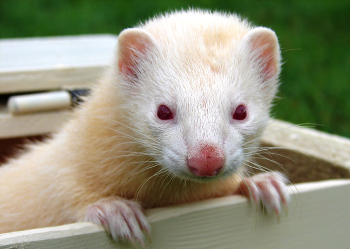 les animaux albinos 3