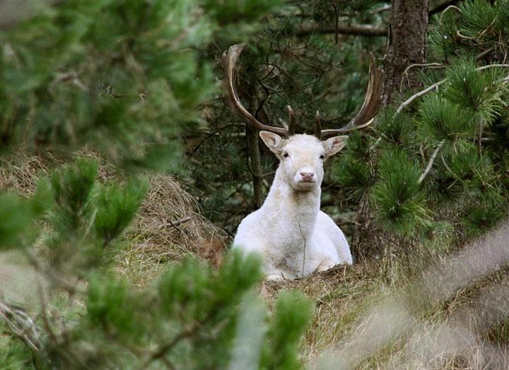 les animaux albinos 37