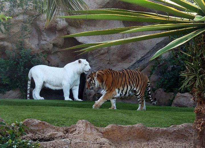 les animaux albinos 43