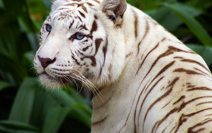 les animaux albinos 44