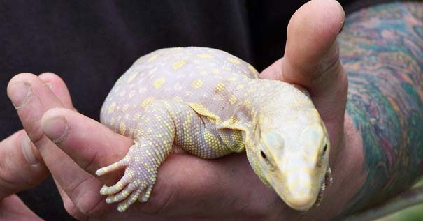 les animaux albinos 48