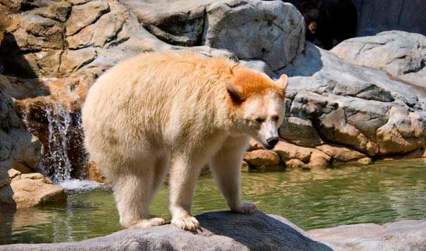 les animaux albinos 7