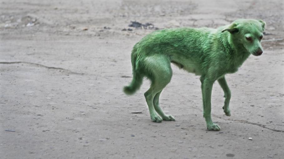 Chien Peint pourquoi sommes-nous choqués par la souffrance animale ? | etrange