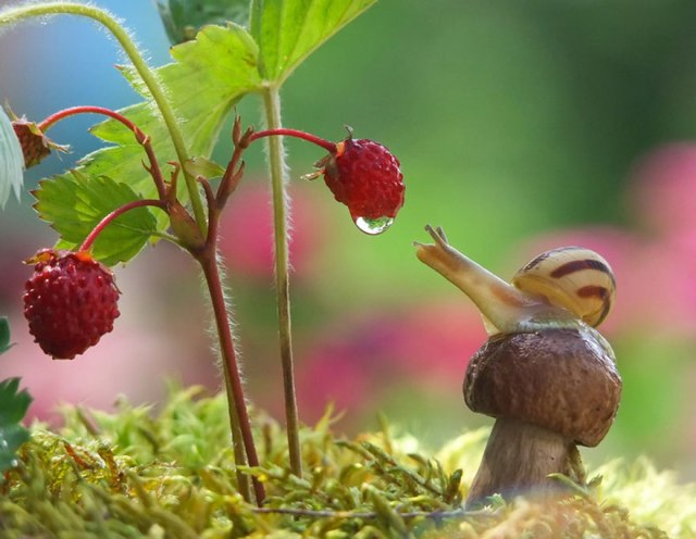 Le petit monde des escargots 110