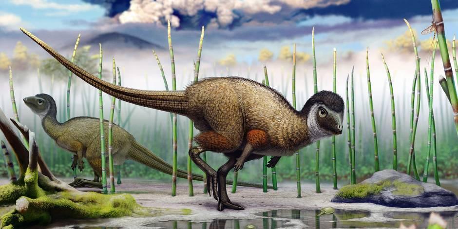 Les dinosaures avaient-ils des plumes 03