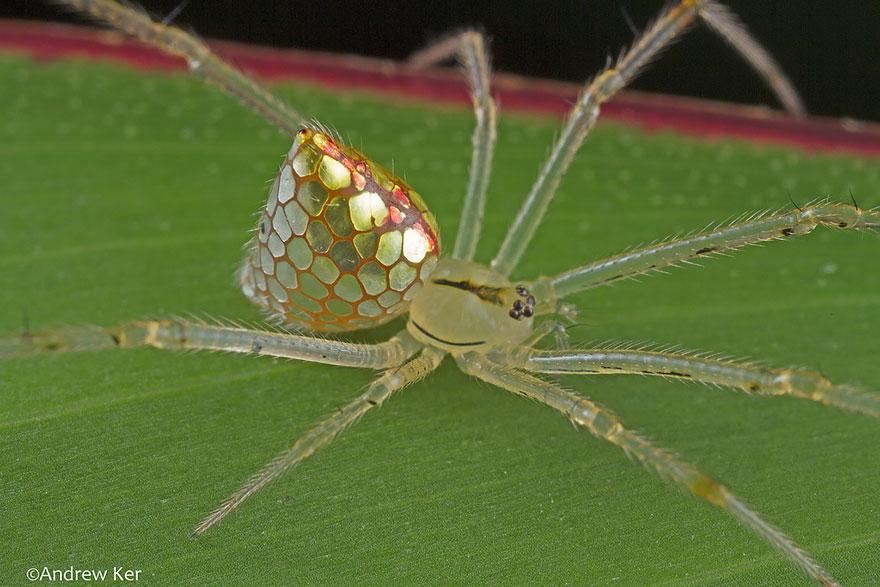 """Résultat de recherche d'images pour """"araignée étrange"""""""