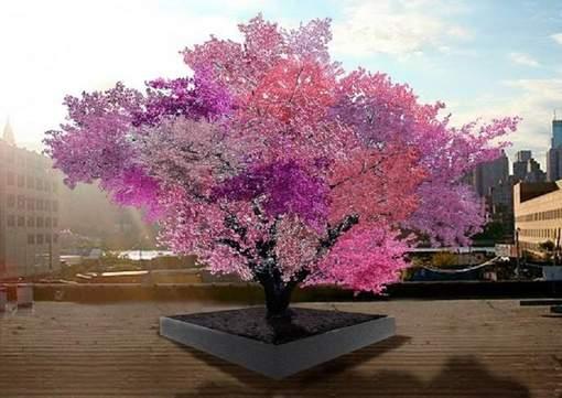 L'avantage de cet arbre hybride est qu'il ne submerge pas le jardin, vu que les fruits ne poussent pas forcément tous à la même époque. De plus, il évite le gaspillage. © (Facebook).