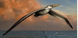 Une vue d'artiste du plus grand oiseau du monde Reconstitution de Liz Bradford, via Bruce Museum