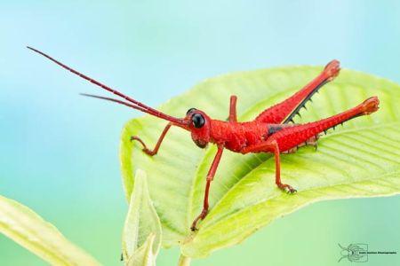 Les photos macro fascinantes d'insectes de Colin Hutton (galerie) 10