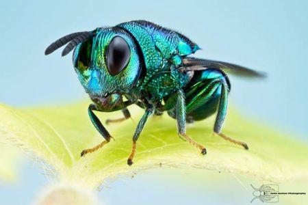 Les photos macro fascinantes d'insectes de Colin Hutton (galerie) 111