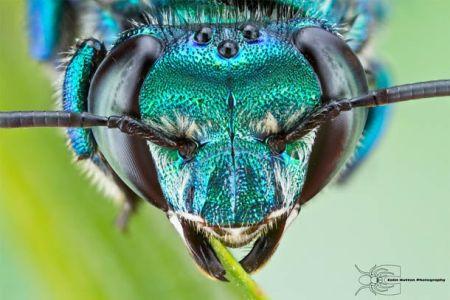 Les photos macro fascinantes d'insectes de Colin Hutton (galerie) 121
