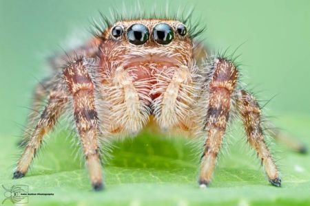 Les photos macro fascinantes d'insectes de Colin Hutton (galerie) 151