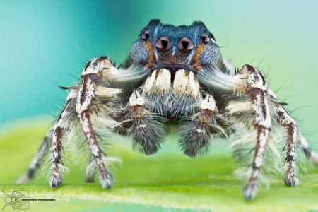 Les photos macro fascinantes d'insectes de Colin Hutton (galerie) 161