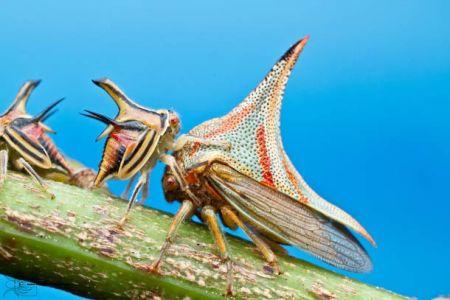 Les photos macro fascinantes d'insectes de Colin Hutton (galerie) 171