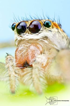 Les photos macro fascinantes d'insectes de Colin Hutton (galerie) 18
