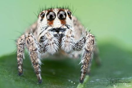 Les photos macro fascinantes d'insectes de Colin Hutton (galerie) 19