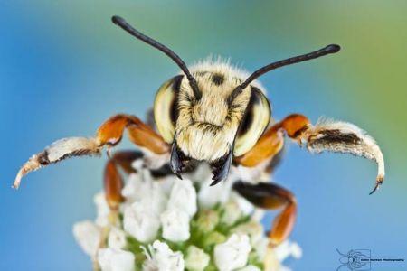 Les photos macro fascinantes d'insectes de Colin Hutton (galerie) 211