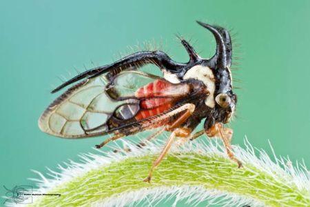 Les photos macro fascinantes d'insectes de Colin Hutton (galerie) 221