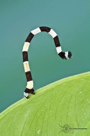 Les photos macro fascinantes d'insectes de Colin Hutton (galerie) 23
