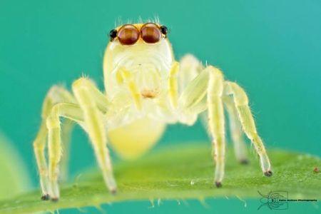 Les photos macro fascinantes d'insectes de Colin Hutton (galerie) 231