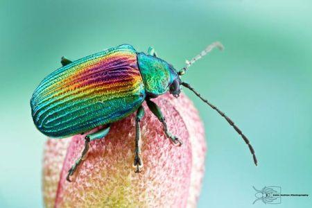 Les photos macro fascinantes d'insectes de Colin Hutton (galerie) 24
