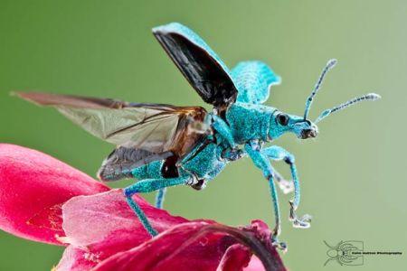 Les photos macro fascinantes d'insectes de Colin Hutton (galerie) 25