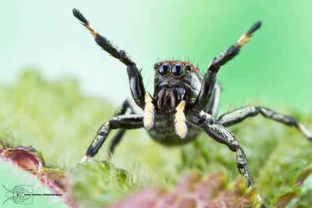 Les photos macro fascinantes d'insectes de Colin Hutton (galerie) 26