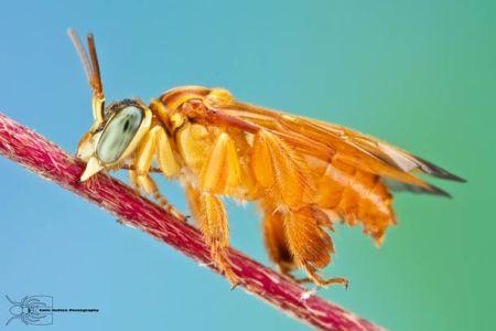Les photos macro fascinantes d'insectes de Colin Hutton (galerie) 27