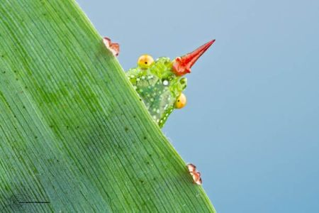 Les photos macro fascinantes d'insectes de Colin Hutton (galerie) 33
