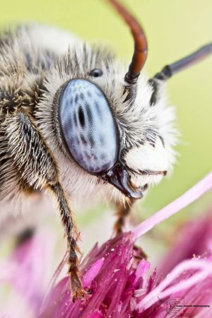 Les photos macro fascinantes d'insectes de Colin Hutton (galerie) 43