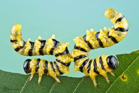 Les photos macro fascinantes d'insectes de Colin Hutton (galerie) 52